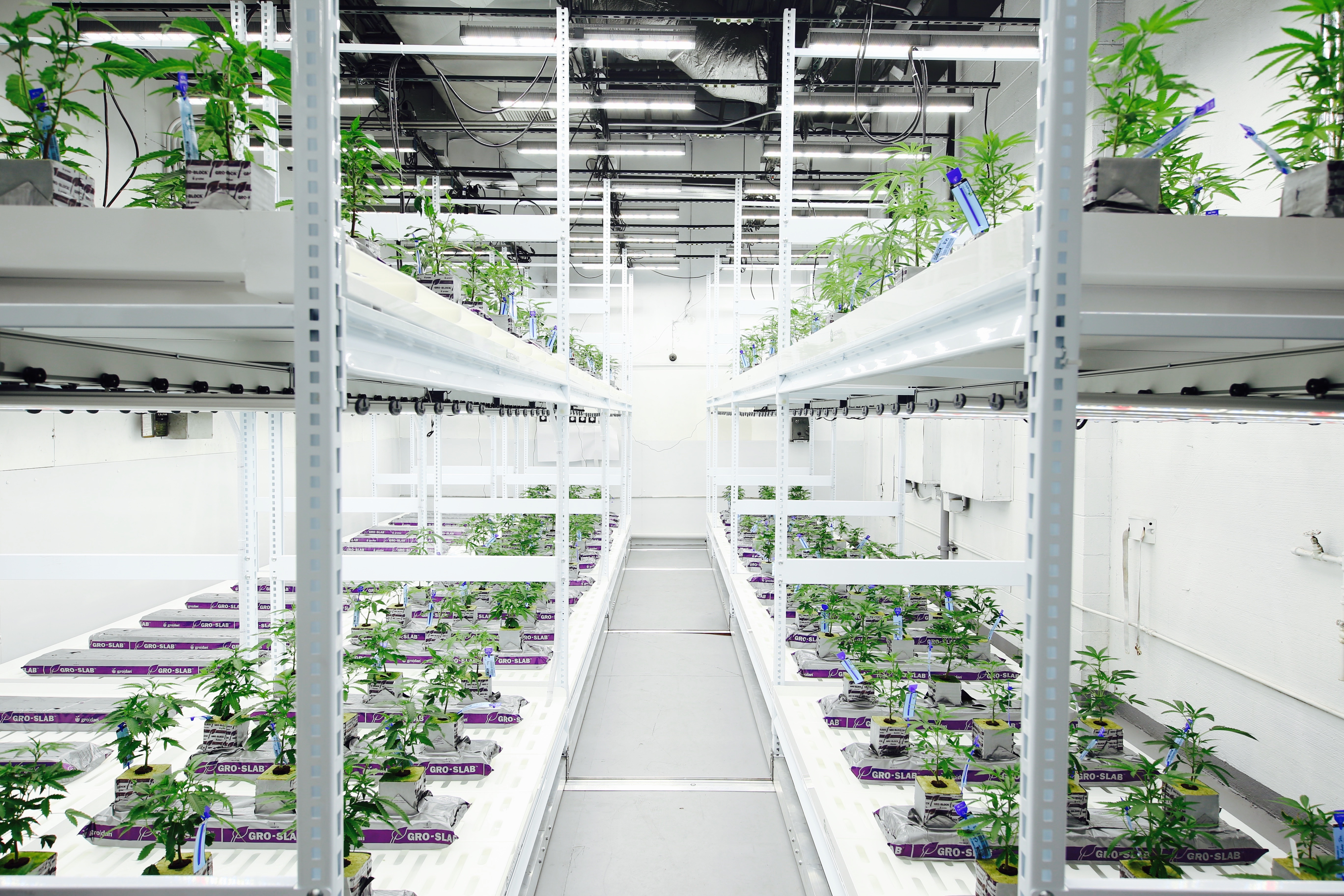 Double Level Grow Room under Fluence Vyprx